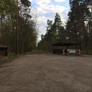 Waldweg am See